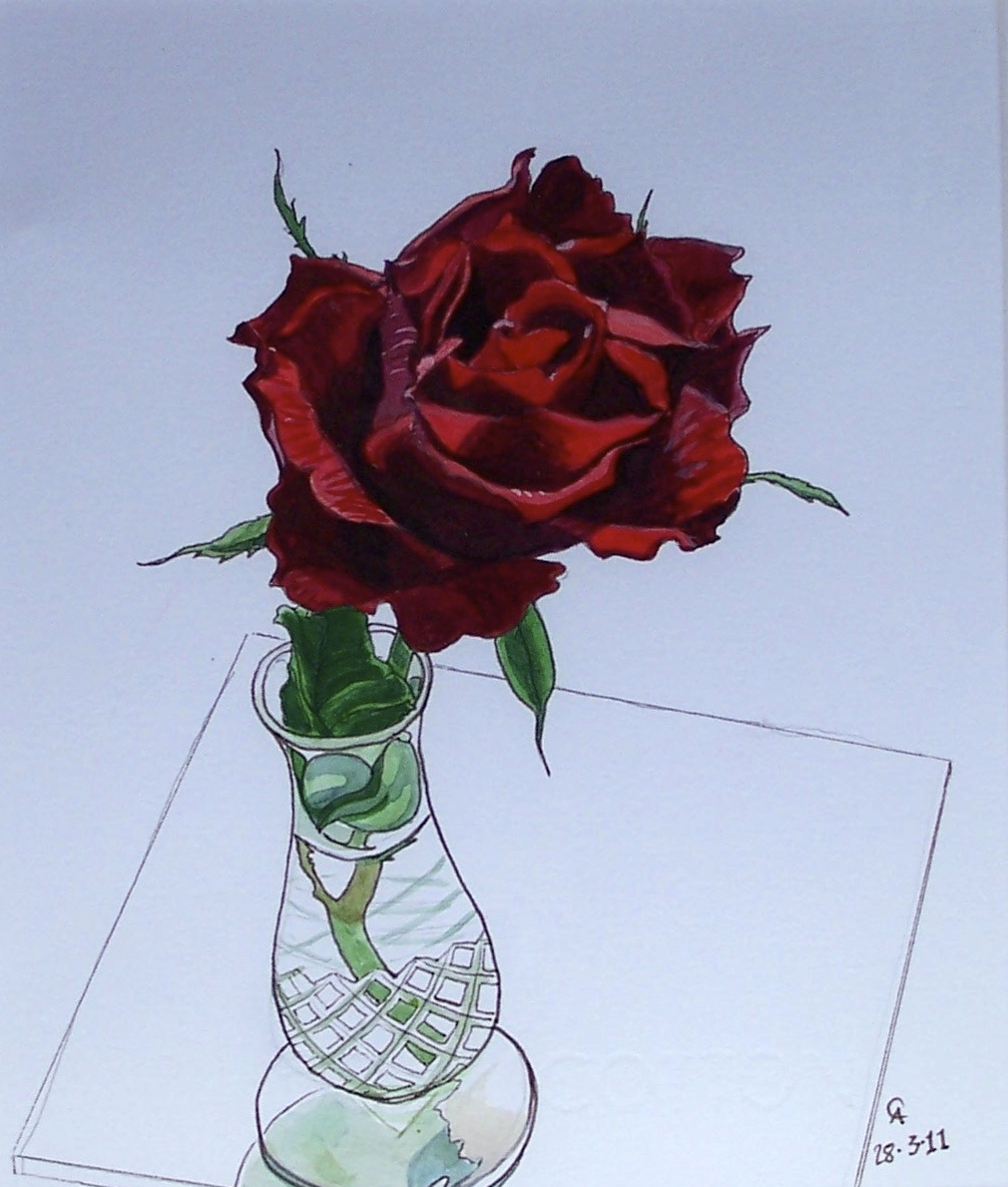 Rose for red cross auction.