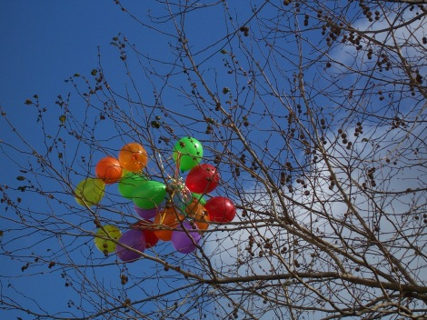 Balloons caught in a tree in the King's Road.