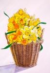 Derbyshire daffodils.